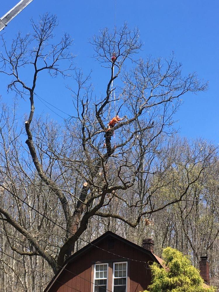 North Hills Tree Service